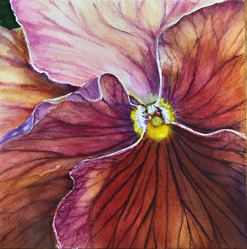 Terry Fitzgerald  Pansy