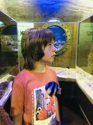 In a fish tank