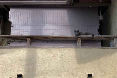 The Cats of University Heights: Chancy