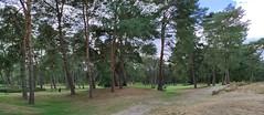 Golfeurs Sur Parcours Fontainebleau 6