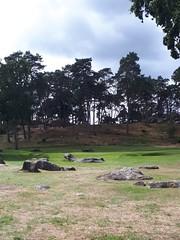 Parcours Fontainebleau 15