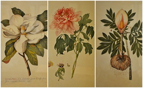 Reproduction Prints from Flora: an Artistic Voyage through the World of Plants, Florals Desire and Design, Royal Ontario Museum, Toronto, ON