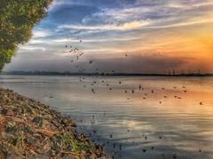 Sungei Buloh Wetland Reserve sunset, Singapore