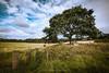 Linton Farm Standing Stones