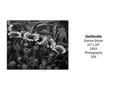 "Gaillardia • <a style=""font-size:0.8em;"" href=""http://www.flickr.com/photos/124378531@N04/50297801178/"" target=""_blank"">View on Flickr</a>"