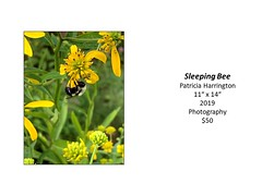 "Sleeping Bee • <a style=""font-size:0.8em;"" href=""http://www.flickr.com/photos/124378531@N04/50298480946/"" target=""_blank"">View on Flickr</a>"