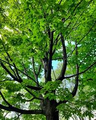 summer green (explored)