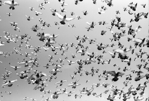 """The Birds  (Fuji Acros) • <a style=""""font-size:0.8em;"""" href=""""http://www.flickr.com/photos/65969414@N08/50316859093/"""" target=""""_blank"""">View on Flickr</a>"""