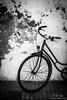 Essaouira Bike