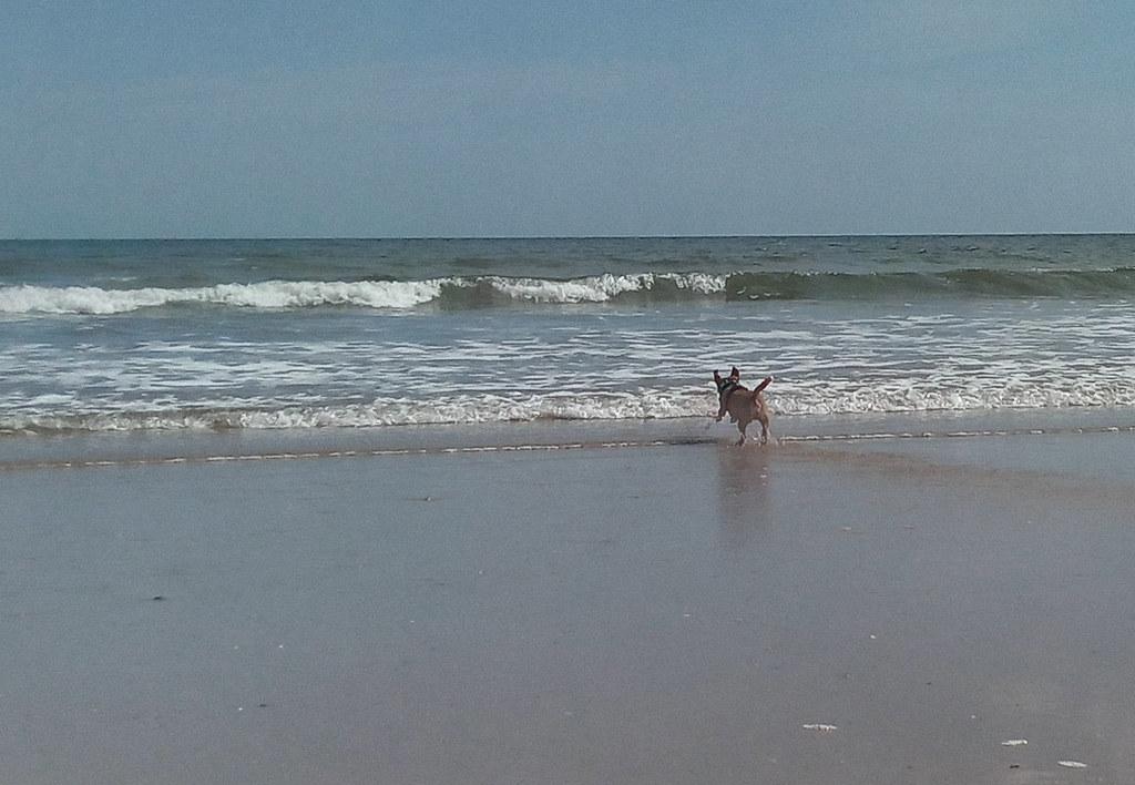 Bram_the_Sea_Dog