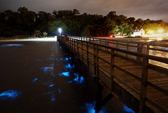 Bioluminescent Harmful Algal Bloom