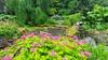 Bridgemere Garden World (4)