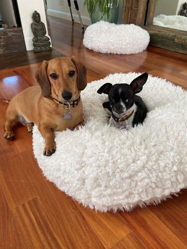 Atticus & Oliver W