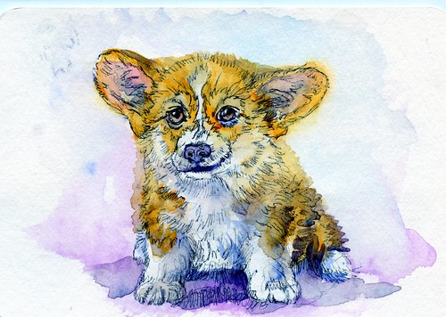 Pembroke Welsh Corgi Puppy-Postcards for the Lunch Bag