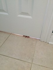"""Luc Under the Door • <a style=""""font-size:0.8em;"""" href=""""http://www.flickr.com/photos/109120354@N07/50336493163/"""" target=""""_blank"""">View on Flickr</a>"""