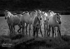 """Horses of My Dreams • <a style=""""font-size:0.8em;"""" href=""""http://www.flickr.com/photos/106269596@N05/50337360043/"""" target=""""_blank"""">View on Flickr</a>"""