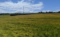 Photo of Pylon Over The Field