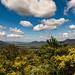 Pioneer Valley, Queensland.