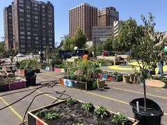 Resiliency Garden