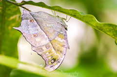 Photo of Butterfly (72)