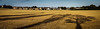 Tayport shadows on harvested field
