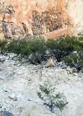 Petroglyph site