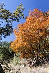Autumn in December - HTmT!