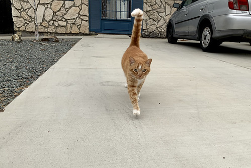 The Cats of University Heights: Speckle
