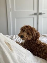 Cleo is a Windy & Richie puppy