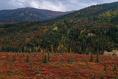 Evergreens and Autumn Tundra Across the Denali Landscape (Denali National Park & Preserve)