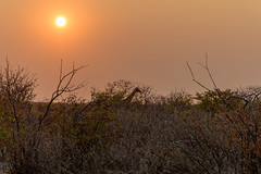 Ongava Private Reserve, Namibie
