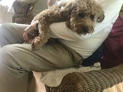 Dallas is a sweet Baby & Buckwheat puppy