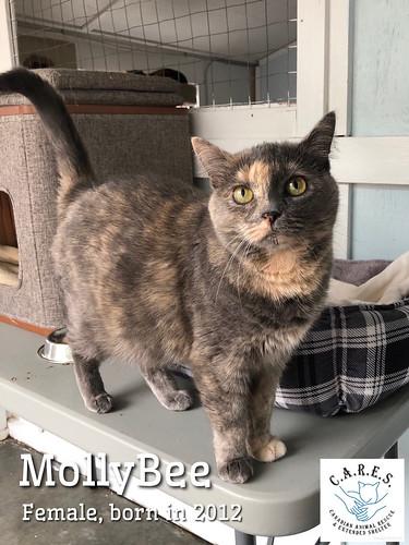 MOLLYBEE    Female  8yrs
