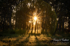 September 13, 2020 - Sunrise through the trees. (Tony's Takes)