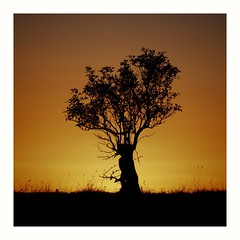 Photo of Lone Tree Sunset