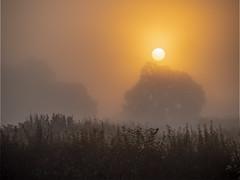 Photo of Sunrise through the mist