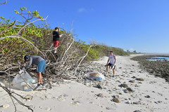 Sailors cleanup a beach in Diego Garcia.