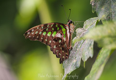 Photo of Butterfly (73)