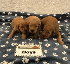 Bailey Boys pic 3 9-18