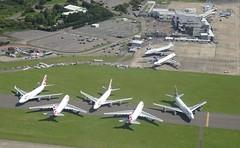 Photo of A herd of Jumbos