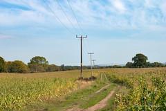 Photo of Chelford Crops
