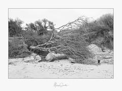 'Fallen' - Tardinghen