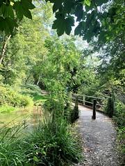 Photo of Woodland and river near Croxley Green Barn,, Rickmansworth, Herts. UK