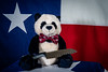Day by day, Aggie Ninja Panda is taking my sanity.