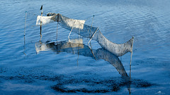 2020-09-20 16.29.57 - Flyverfisker, Whatever, 264-366, Uge 38, Virksund - _9202930 - ©Anders Gisle Larsson