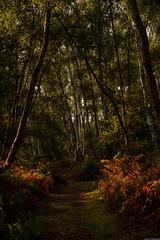 Photo of Woodland Path