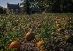 Photo of Vineyard Farm, pumpkins