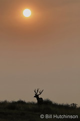 September 16, 2020 - A deer buck on a smoky morning. (Bill Hutchinson)