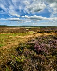 Photo of Levisham Moor
