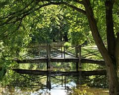 Photo of Bridge at Thorp Perrow Arboretum